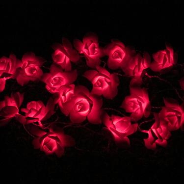 Saulės rožių styginių šviesa